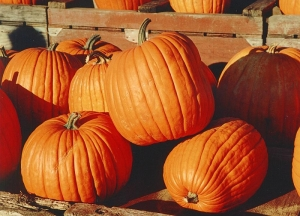 pumpkins-5